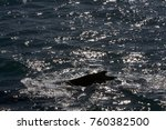 iceland whale fin. dark contour ... | Shutterstock . vector #760382500