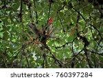 Small photo of Aechmea Nudicaulis flower on tree