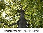 vibrant green tree   Shutterstock . vector #760413190