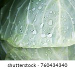 fresh cabbage head covered with ... | Shutterstock . vector #760434340