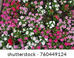 flowerbed with blooming... | Shutterstock . vector #760449124
