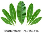 green banana leaves isolated | Shutterstock . vector #760453546