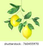 lemon branch on light green... | Shutterstock . vector #760455970