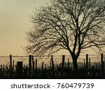 vineyards with tree in sunset | Shutterstock . vector #760479739