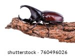 dynastinae fighting beetle... | Shutterstock . vector #760496026