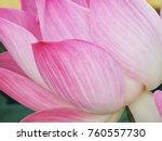 pink lotus flower for pray...   Shutterstock . vector #760557730