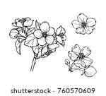 ink  pencil   the leaves and... | Shutterstock .eps vector #760570609