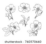 ink  pencil   the leaves and... | Shutterstock .eps vector #760570660