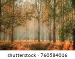 forest foliage nature | Shutterstock . vector #760584016