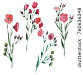 wildflower flax flower in a...   Shutterstock . vector #760636348