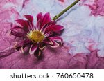 the flower chrysanthemum on the ... | Shutterstock . vector #760650478