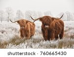 hairy scottish highlanders in a ... | Shutterstock . vector #760665430
