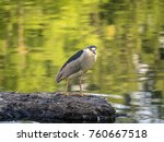 black crowned night heron... | Shutterstock . vector #760667518