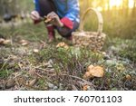 picking mushrooms in the forest | Shutterstock . vector #760701103
