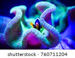 wonderful and beautiful... | Shutterstock . vector #760711204