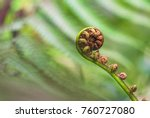 New Zealand Koru  An Unfurling...