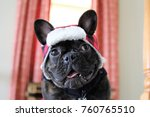 brindle french bulldog wearing... | Shutterstock . vector #760765510