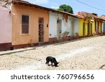 dog in the middle of cobble...   Shutterstock . vector #760796656