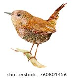 The Bird Is The Wren ....