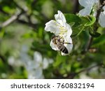 bee pollination process  | Shutterstock . vector #760832194