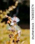 nature flora flower background... | Shutterstock . vector #760833574