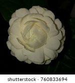 white flower in the dark... | Shutterstock . vector #760833694