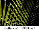 blurry pattern of the fan palm... | Shutterstock . vector #760835620
