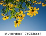 sunflower background sky | Shutterstock . vector #760836664