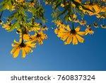 sunflowers background sky | Shutterstock . vector #760837324