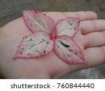 pretty leaves background | Shutterstock . vector #760844440