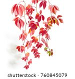 several branches of maiden... | Shutterstock . vector #760845079