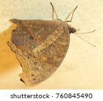 beautiful butterfly isolated | Shutterstock . vector #760845490