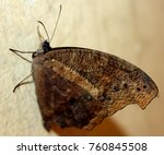 beautiful butterfly isolated | Shutterstock . vector #760845508