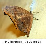 beautiful butterfly isolated | Shutterstock . vector #760845514