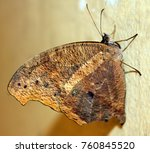 beautiful butterfly isolated | Shutterstock . vector #760845520