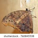 beautiful butterfly isolated | Shutterstock . vector #760845538