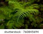 fern in portland's crystal... | Shutterstock . vector #760845694