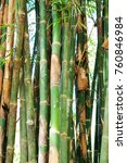 bamboo branch in bamboo forest  ... | Shutterstock . vector #760846984