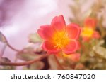 soft focus grass flower spring... | Shutterstock . vector #760847020
