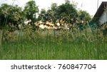beautiful sparkling grass  | Shutterstock . vector #760847704