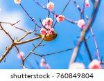 the japanese white eye.the... | Shutterstock . vector #760849804