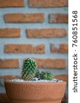 cactus cactus in a potted plant ... | Shutterstock . vector #760851568