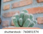 cactus cactus in a potted plant ... | Shutterstock . vector #760851574