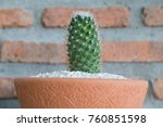 cactus cactus in a potted plant ... | Shutterstock . vector #760851598