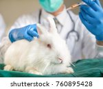 Stock photo the closeup of a white rabbit in the laboratory with doctor in uniform with stethoscope and going 760895428
