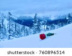 Broken Heart. Red Rose In Snow...