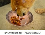 Small photo of Dog eat dog food