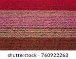 Tulip Field Nature Abstract...