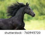 Stock photo portrait of black frisian horse with developing mane on nature background 760945720