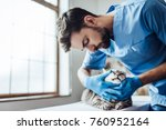 Stock photo handsome male doctor veterinarian is examining cute grey cat at vet clinic checking the teeth 760952164